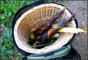 cesta verdure selvatiche