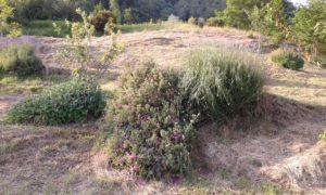 fuga in agriturismo in Versilia: erbe aromatiche