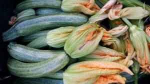 Zucchine appena colti per la scarpaccia