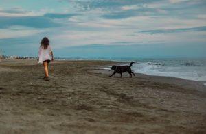 versilia spiaggia cane-compressa