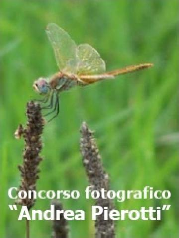 MOSTRA DEL CONCORSO FOTOGRAFICO IN MEMORIA DI ANDREA PIEROTTI