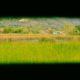 oasi lipu massarosa versilia