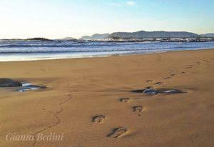 Spiagge Versilia, Darsena Viareggio